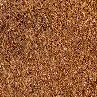 Gauco_1441_lightbrown
